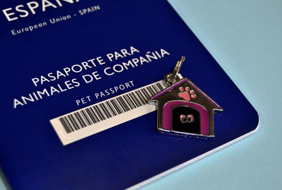 Vas A Viajar Al Extranjero La Sre Emite: Viajar Al Extranjero Con Mi Mascota, ¿qué Debo Saber