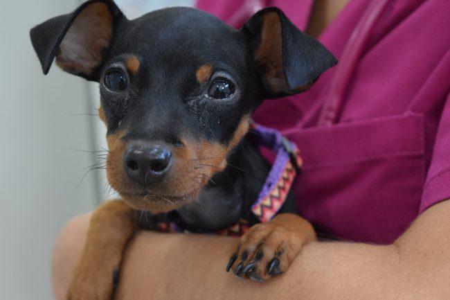 Adopción perro Jaén