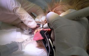 Clínica Veterinaria Jaén limpieza dental perro