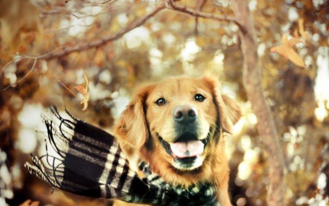 consejos otoño mascotas