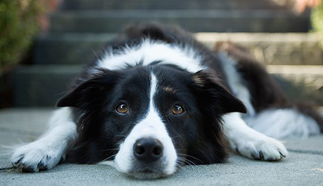 epilepsia perros y gatos