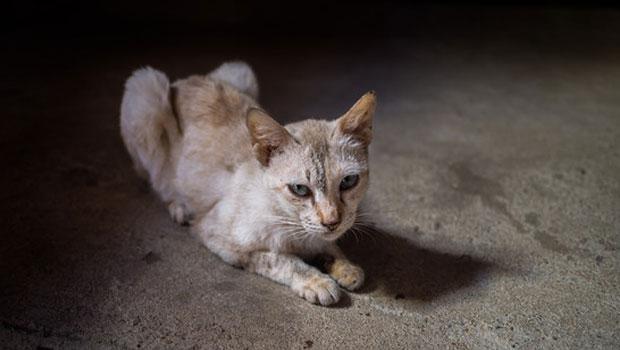Gatos anoréxicos alimentación asistida