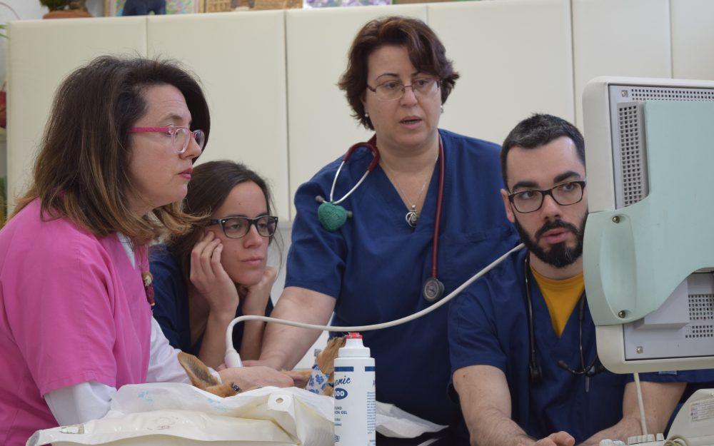 Veterinarios y Auxiliares Clínica Albacora