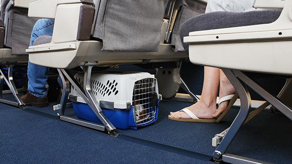 Viajar con mascotas extranjero