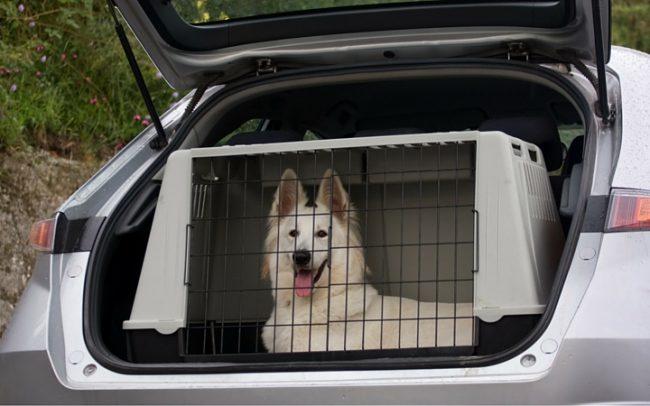 Transporte perros maletero