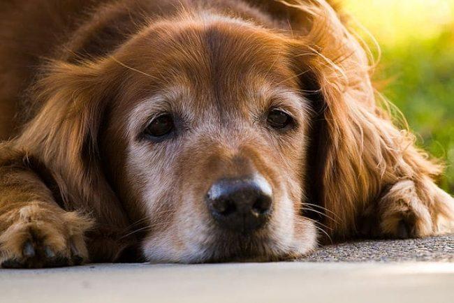 enfermedades animales geriatricos