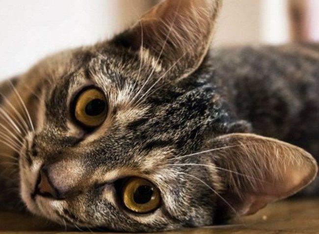 Intoxicaciónl gatos