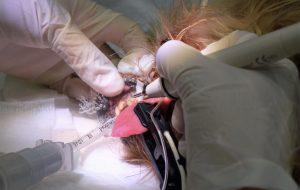limpieza dental perro
