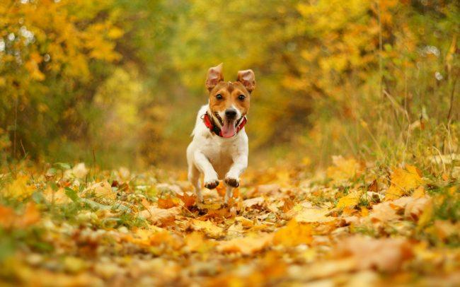 consejos mascotas otoño