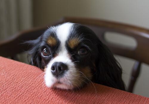 Problema de comportamiento perro